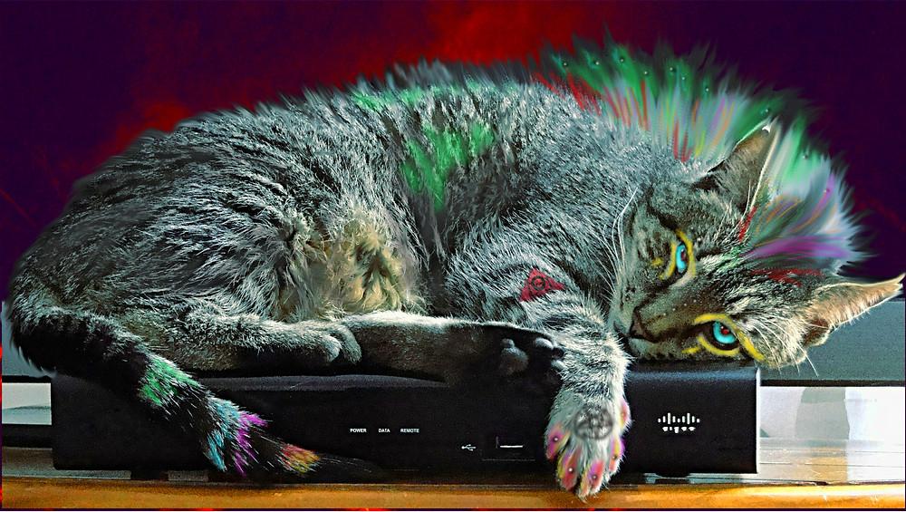 "Gajiru ""Gajeel"" mohecan lazy cat indie artist"