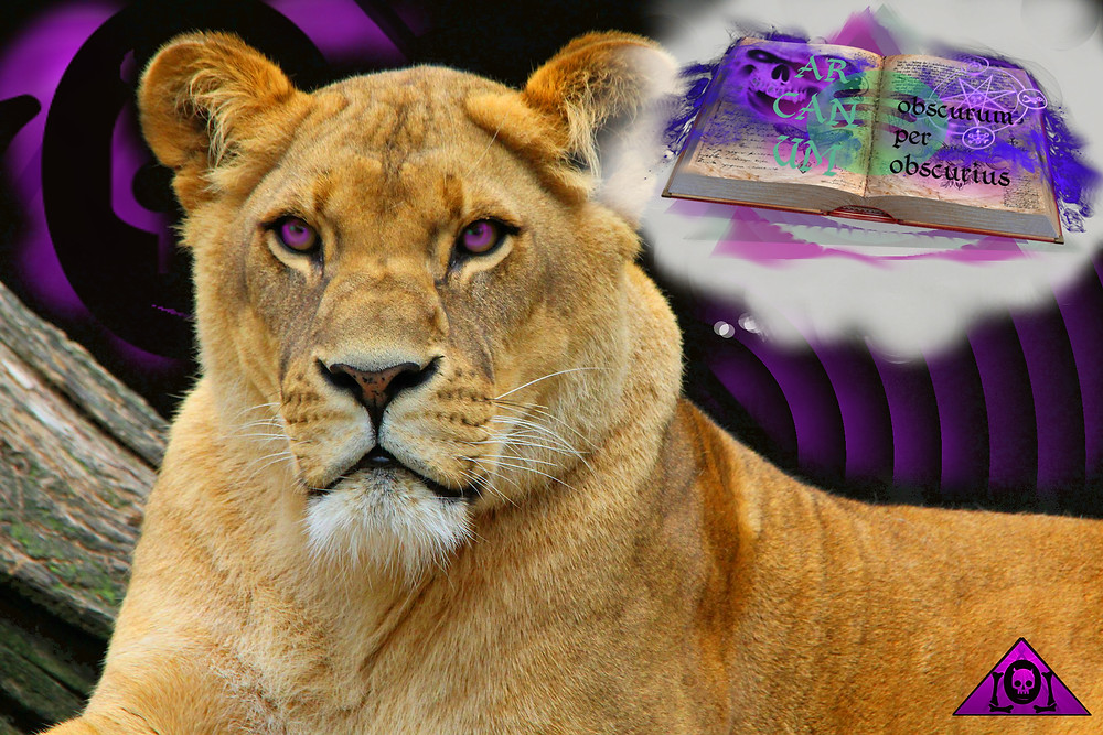 Lion ponders the arcana of Spotify royalty secrets.