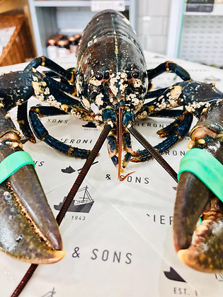 Fresh Live Lobsters