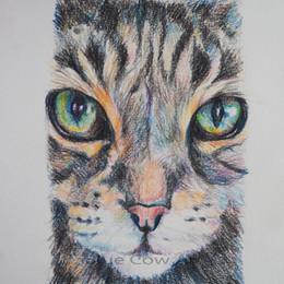 Kerry's Cat w.jpg