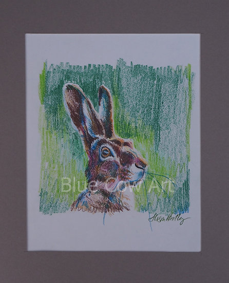 Hare in the Sun Drawing BCA94