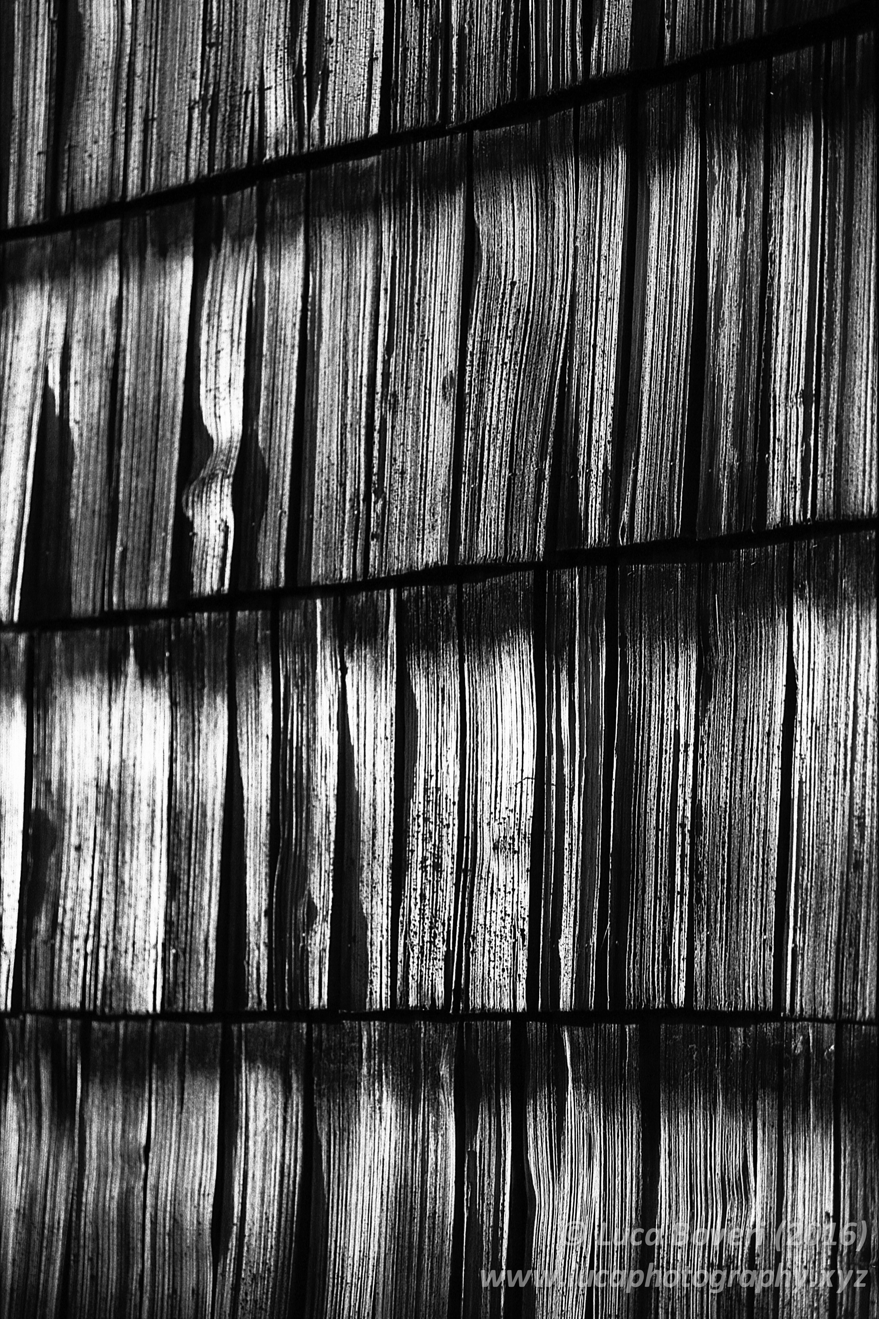 Wood Texture. lucaboveri
