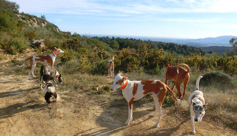 Tarragona: Podencos-im Gelände