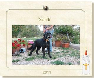 PHF-Hund-Gordi-verstorben