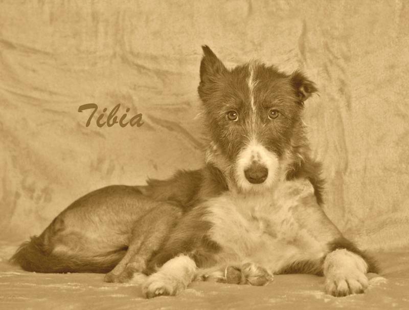 Tibia6