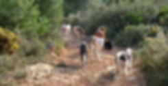 Tarragona: Podencos-im-Gelände