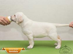 1.AN2 Amidala orange