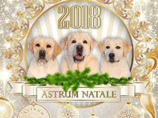 С Новым Годом Желтой Собаки!!!