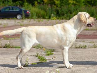 Республиканская выставка собак всех пород (CAC)