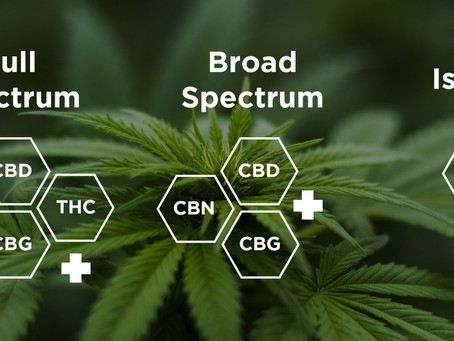 Your CBD Questions Answered