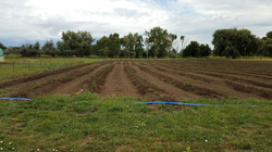 Tindakan Innovation Hemp Farm