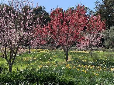 Orchard.Horizontal1.jpg