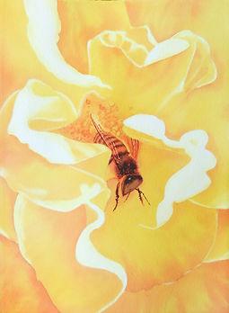 aa-Guy-Bee.jpg