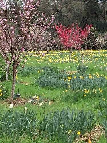 Orchard.Vertical.jpg