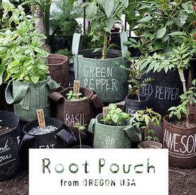 mv_root-poach.jpg