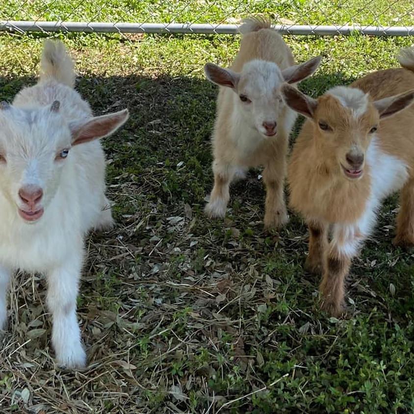 Goat Yoga July 11