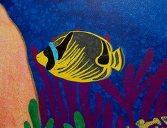 Raccoon Butterfly Fish Detail