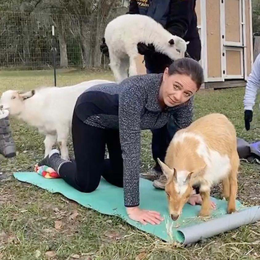 Goat Yoga NEW LOCATION