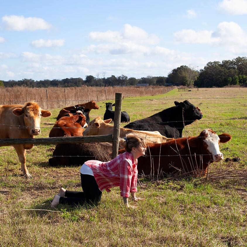 Halloween Family Yoga on the Farm