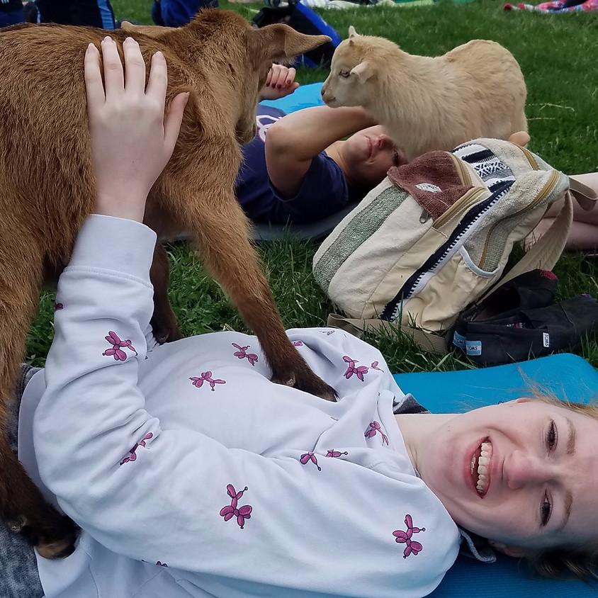 Goat Yoga w/ Danielle