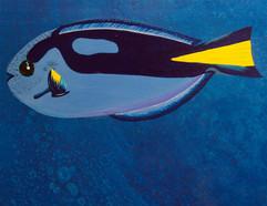 Blue Tang Detail