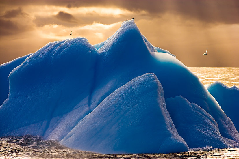 SCOTIA SEA #8 (ANTARCTICA)