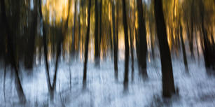 66 Woodland Study #121.jpg