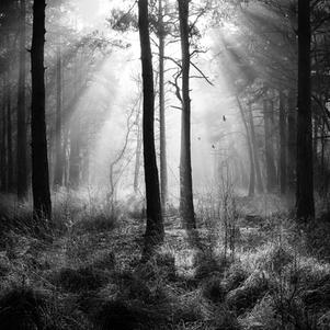 In the Forest 3840x3840.jpg