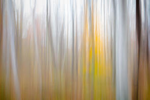 John Atchley Woodland Study #27.jpg