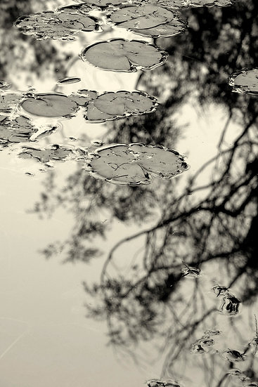Branches and Lily Pads
