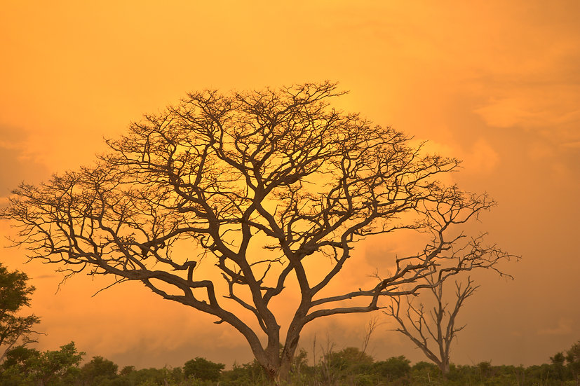 VUMBURA PLAINS #193 (AFRICA)