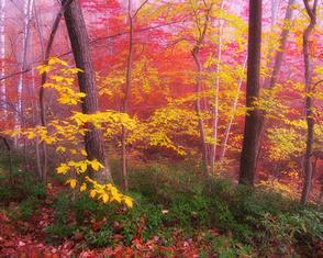 John Atchley_OutofDarkness_ Pink October