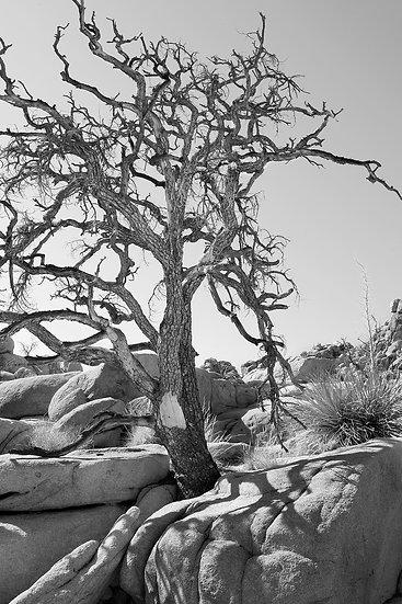 TREE & STONE