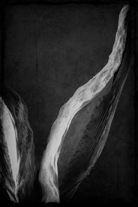 Milkweed-4.jpg