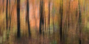 5 Woodland Study #118.jpg
