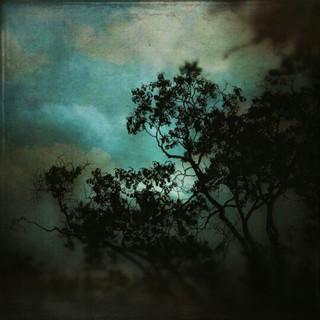DONNA DANGOTT_Tree Silhouettes  Across T