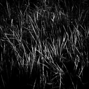 54++Reeds+%236.jpg