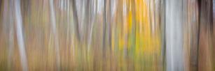 Woodland Study #27-3.jpg