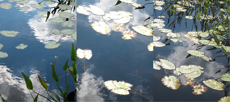 WATER LILIES TRIPTYCH #3