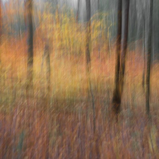 16 Atchley Woodland Study #53.jpg