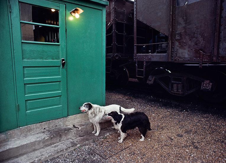 YARD DOG LOYALTY, EAST ST. LOUIS, ILLINOIS 1977