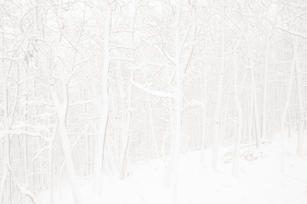 John Atchley_OutofDarkness_Snow Trees #2