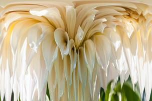 20150823_fire_fly_&_florals_0176_polarcordinates.jpg