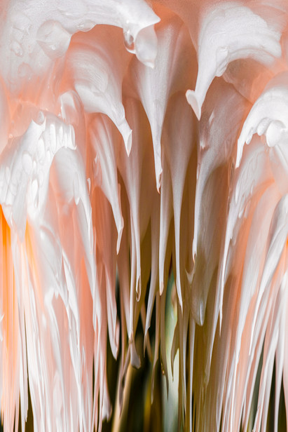 20150823_fire_fly_&_florals_pc_peach_0210.jpg