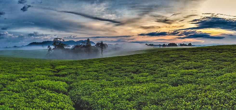 NYUNGWE #149 (RWANDA)