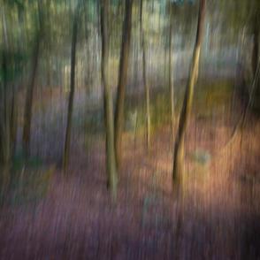 12 Atchley Woodland Study #31.jpg