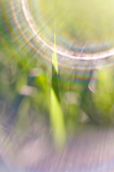 GRASS IN LIGHT
