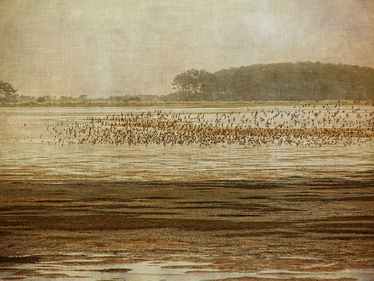 FLOCK RISING CHINCOTEAGUE
