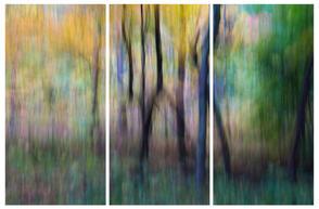 Woodland 95 Triptych.jpg