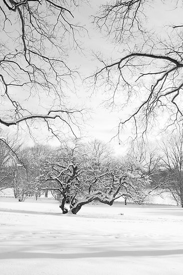 SNOW TREES REACHING